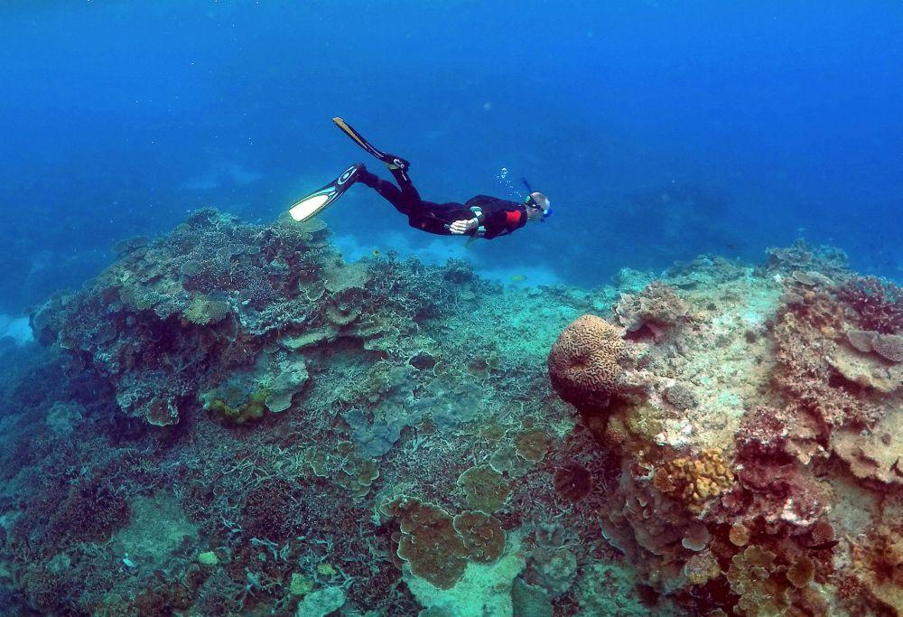 Great Barrier Reef outlook downgraded to 'very poor'