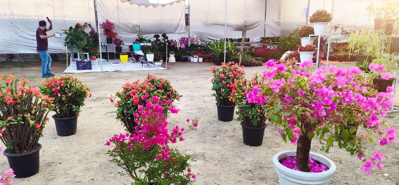 To Earth with Love: Flower Show 2020 begins today
