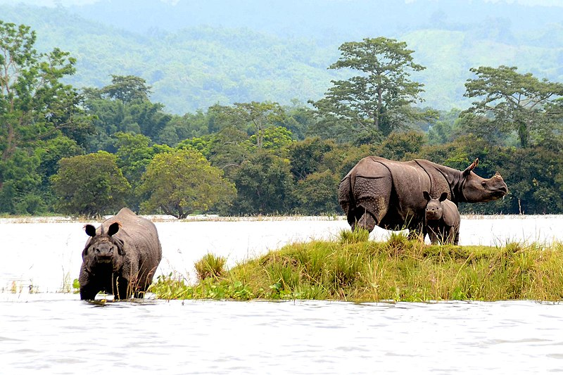 Kaziranga to be opened for tourists on Saturday