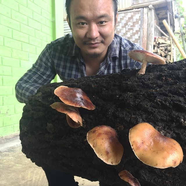 Young scientist grows organic shiitake mushrooms in Nagaland