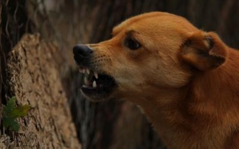 Stray dogs can better understand human gestures: Study