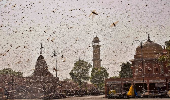 Swarms of locust in the walled city of Jaipur, Rajasthan, on Monday. More than half of Rajasthan's 33 districts are affected by invasion by these crop-munching insects. Photograph: PTI Photo