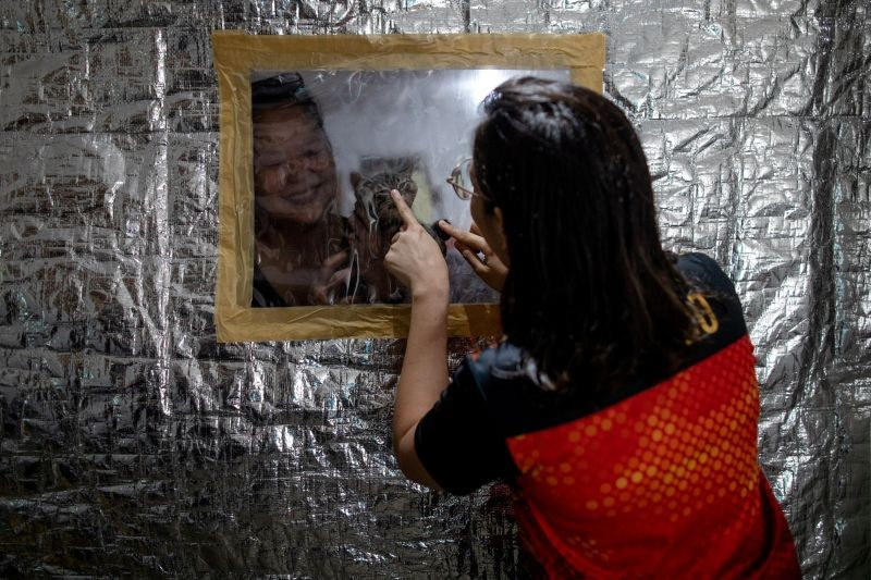 Jan Claire Dorado, 30, a doctor assigned to the coronavirus disease (COVID-19) Emergency Room of East Avenue Medical Center, bonds with her mother and cat from behind the small plastic window on her makeshift isolation room to protect her family from potential exposure to the coronavirus disease (COVID-19), in Quezon City, Metro Manila, Philippines on June 26, 2020. (REUTERS File Photo)