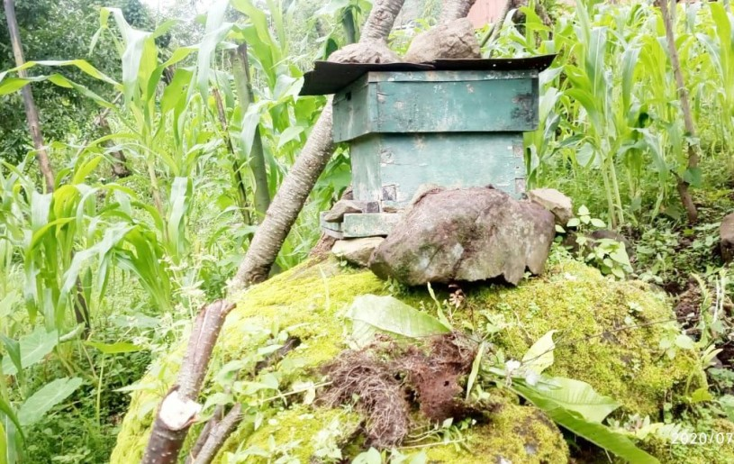 Bee boxes are a constant sight in Chingmei village, where beekeeping has become a major source of revenue for people in the village. (Morung Photo)