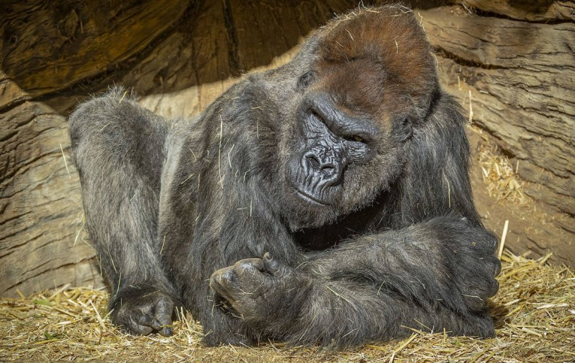 (San Diego Zoo Safari Park/Twitter)