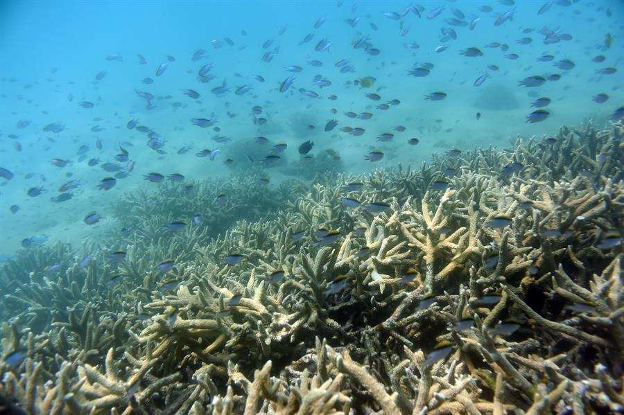 Australia urged to avoid Great Barrier Reef's possible 'in danger' status
