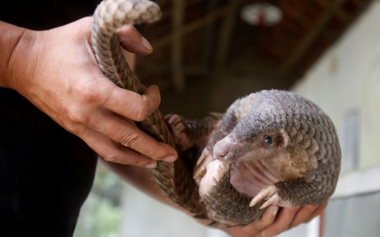 Scientists question work suggesting pangolin coronavirus link