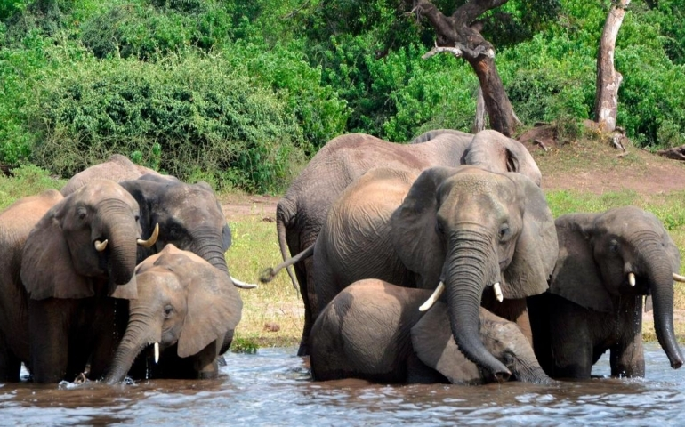 India wants global protection to Asian elephant