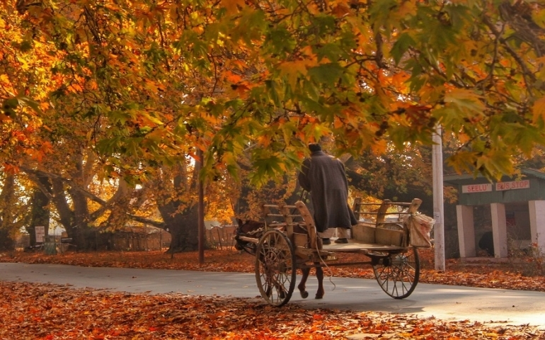 Kashmir's golden yellow autumn arrives without any tourists
