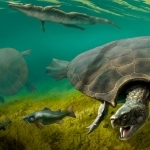 Car-sized prehistoric South American turtle was built for battle