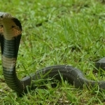 Snakes may be the source of coronavirus outbreak in China